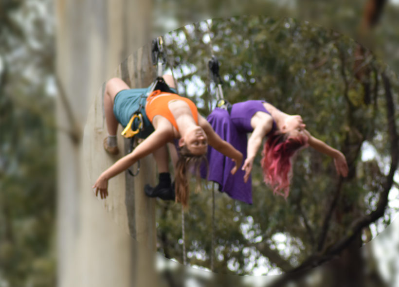 Two women are suspended from a tree, hanging vertically.