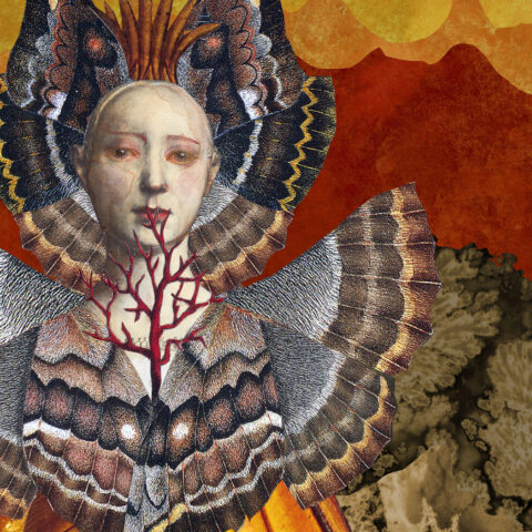 Collage artwork depicting a woman's bust. Collage is made up of insect wings and tree branches.